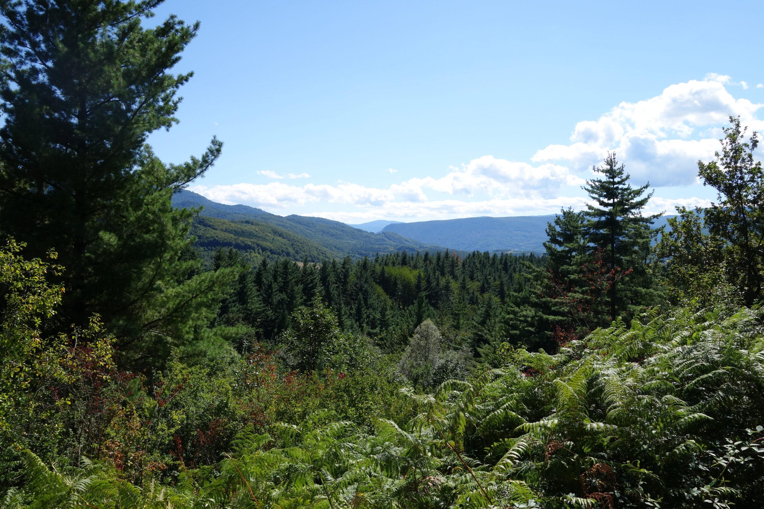 You are currently viewing Die bosnische Berglandschaft
